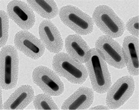 Coated Gold Nanorods