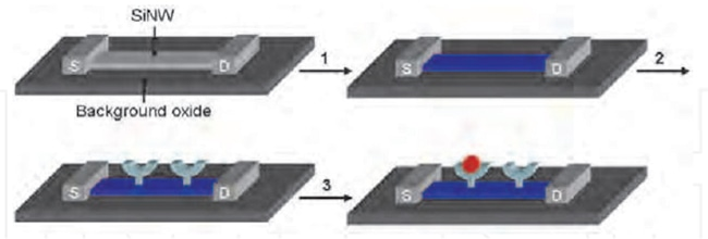 Immobilization of Antibody on Silicon surface