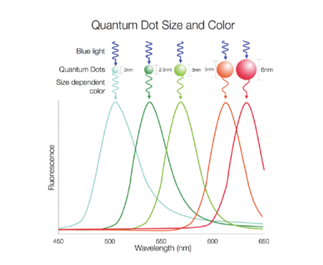 Fluorescence spectra of quantum dots with various sizes.