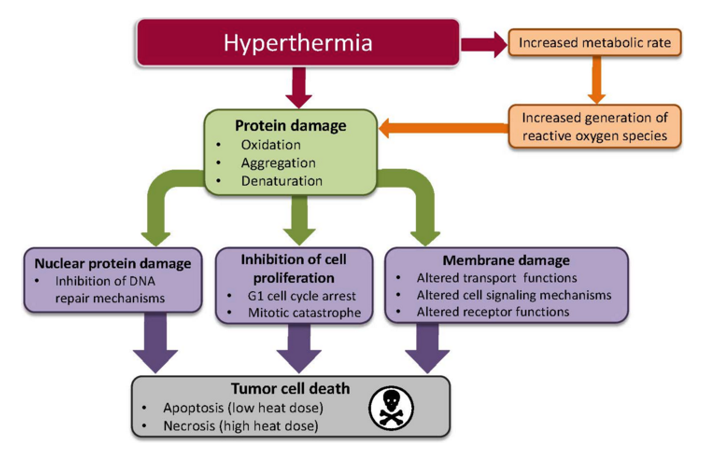 Mechanism of Hyperthermia therapy process